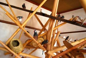 芸術作品としてビル内に放たれた小鳥=10月20日、愛知県豊橋市