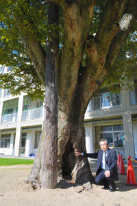 幹の根元のぽっかり開いた穴を指さす蔵内保明校長。木を支えるように木柱も立てられてる=北九州市八幡東区の市立八幡小学校