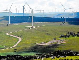 南オーストラリア州スノータウン地区にあるトラストパワー社の風力発電施設。140基近いタービンが回る下で、羊が群れていた=郷富佐子撮影