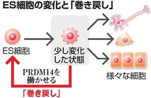 ES細胞の変化と「巻き戻し」
