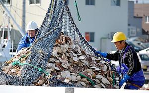 ホタテを船底からクレーンでトラックの荷台に積み込む=10月、北海道・猿払村