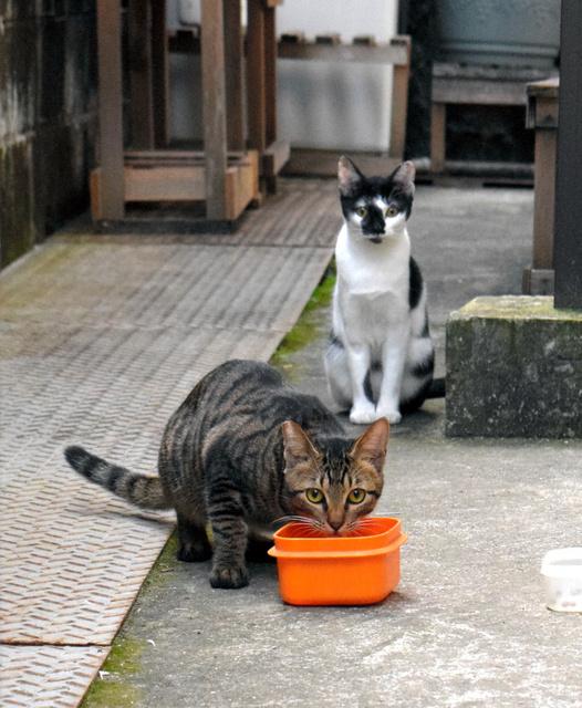 餌やトイレを住民で管理する地域猫=新宮市内