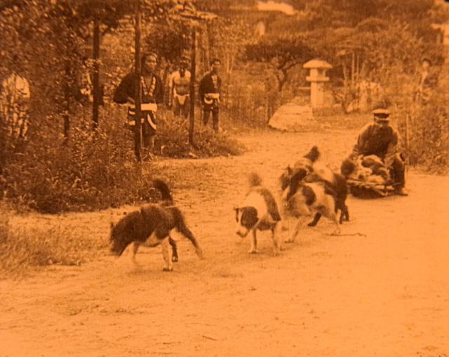 樺太犬の犬ぞり訓練の様子(オレンジ染色)=記録映画「日本南極探検(デジタル復元版)」から