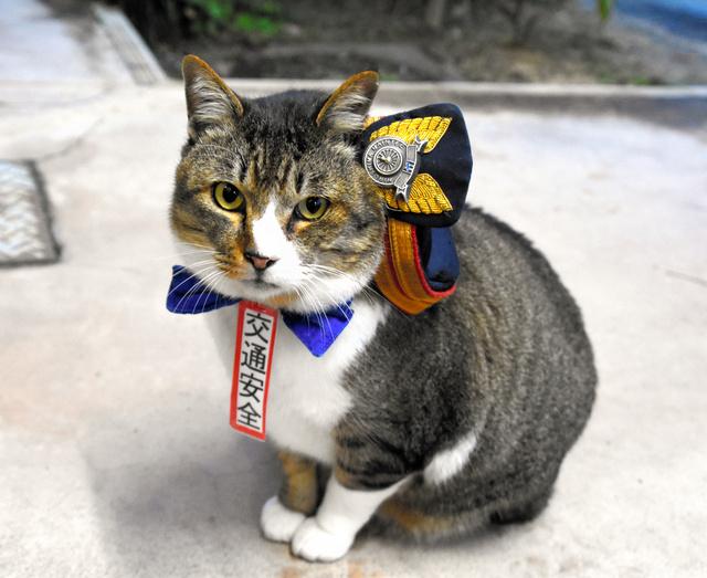 JR志和口駅の「りょうま駅長」。交通安全イベントでも活躍している=広島市安佐北区