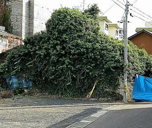 一家3人の遺体が見つかった住宅。大部分が木や草に覆われていた=11月18日、岐阜市