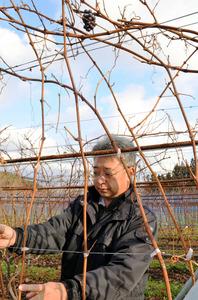 自家栽培のブドウを醸造する高橋さん。特区による産地のイメージアップに期待する=花巻市大迫町亀ケ森