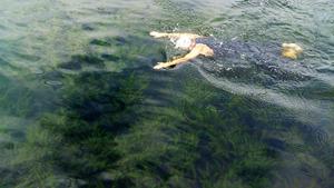 大阪城の東外濠で試し泳ぎをする大阪府トライアスロン協会の関係者。水中には藻がある=9月、大阪市中央区、大会組織委員会提供