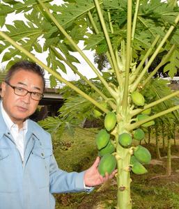 農家の畑で育っているパパイア=堺市美原区