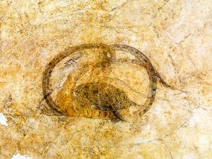 玄武と青竜も修理完了 キトラ古墳壁画、来年にも公開へ
