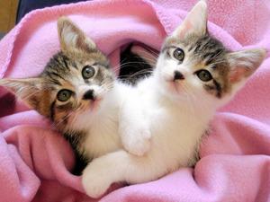 9月に県動物愛護センターで撮影された子猫=県提供