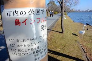 鳥に近づかないよう、水戸市が3日に貼った注意書き=水戸市千波町の千波湖畔