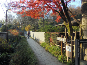 木々に囲まれ、水が流れ、人々が憩う「お鷹の道」=東京都国分寺市
