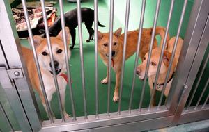 県動物指導センターに収容された犬たち。譲渡されることが決まったという=笠間市日沢