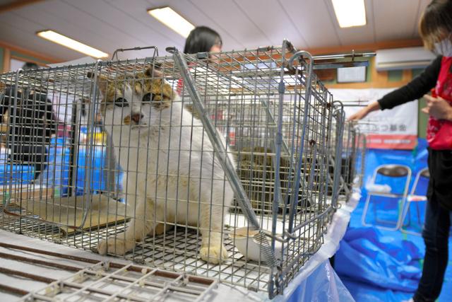 手術をするため順番に並べられた猫=三豊市の志々島
