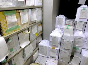 川崎区役所の一室に仮置きされている「引き取り手のない遺骨」が入った箱=11月16日、川崎市、室矢英樹撮影(箱に記された名前などにモザイクをかけています)