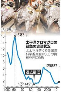 太平洋クロマグロの親魚の資源状況