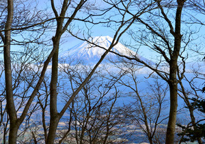 毛無山 富士山を横目に急傾斜