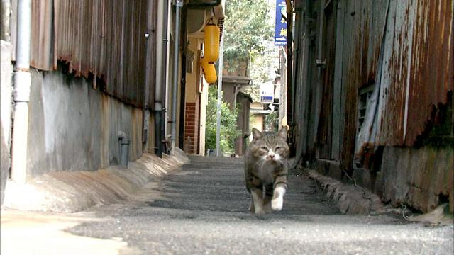 湯の街・別府、路地裏のネコ
