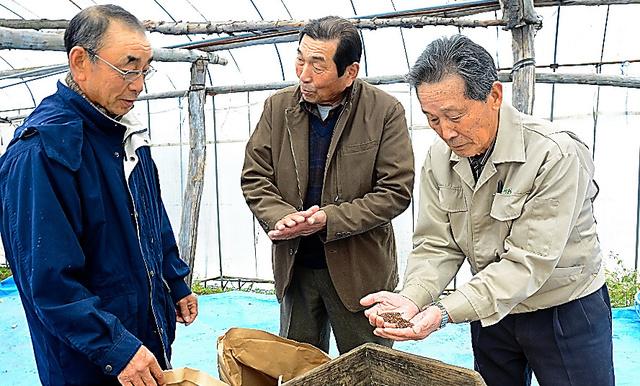 収穫したキビを手に取る川原木賢一さん(右)ら雑穀の生産者=岩手県軽米町上舘