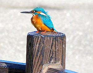冬の野鳥を観察しよう