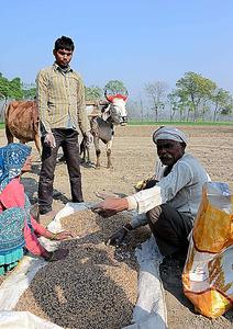 現金不足のあおりで野菜が暴落し、蓄えをすべて小麦の種に使ってしまったという農家。「春の収穫まで、日雇いに出るか、借金をするしかない」=カヤリプール、武石英史郎撮影
