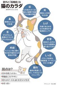 意外と「高機能」な猫のカラダ<グラフィック・宗田真悠>