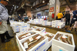 試験操業でとれた魚が並んだ=いわき市中央卸売市場