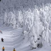 「アイスモンスター」寒波で成長 蔵王、5m超す高さ