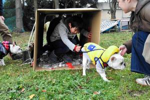 愛犬と一緒にトンネルをくぐる訓練をする男児=御殿場市