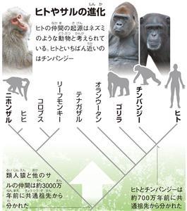ヒトやサルの進化(しんか)