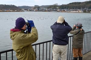 北潟湖の野鳥を調べる県自然保護センターの職員ら=あわら市北潟