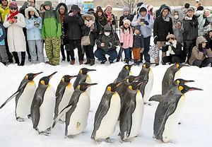 ペンギンの散歩を大勢の来園者が見つめていた