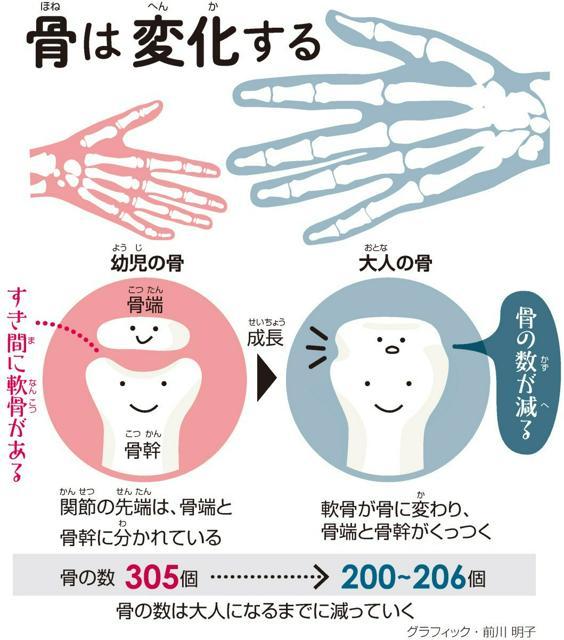 骨(ほね)は変化(へんか)する<グラフィック・前川明子>