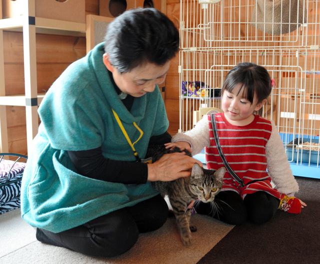 「ねこのいえ」で猫と遊ぶ客=玉城町勝田
