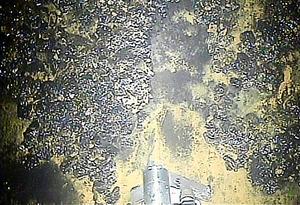 福島第一原発2号機の格納容器内のレールにこびりついた堆積(たいせき)物を、高い水圧で吹き飛ばす掃除ロボット=東京電力提供