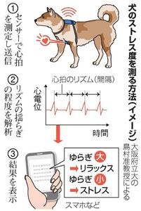 犬のストレス度を測る方法(イメージ)