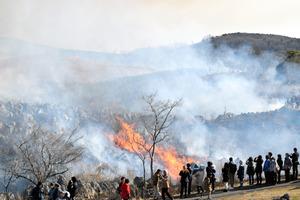 秋吉台で行われた山焼き=19日午前10時2分、山口県美祢市、成沢解語撮影