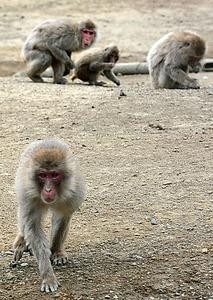 高宕山自然動物園のニホンザル=17日、千葉県富津市豊岡