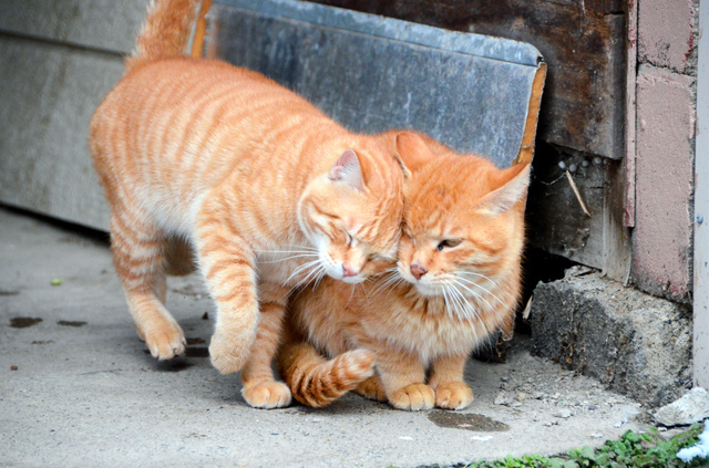 温泉街の片隅では猫が寄り添い合っていた=米沢市の小野川温泉