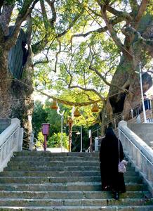 柳さんとは被爆クスノキのある山王神社なども訪れた=長崎市坂本2丁目