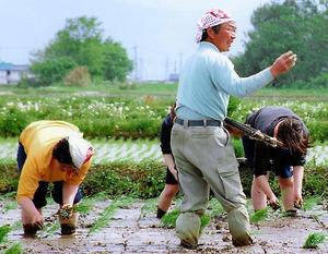 約30年前の有機米の田植え。苗を縦と横、等間隔で植えて、手押しの除草機を入れられるように工夫した。立っているのが渡部務さん=山形県高畠町(渡部さん提供)
