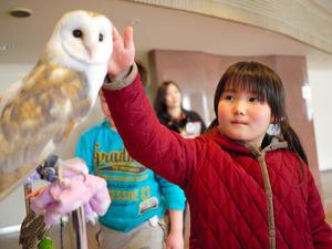 メンフクロウに触れる来場者の女の子=青森市の県総合社会教育センター