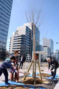 桜の若木を植える参加者=名古屋市中区丸の内2丁目