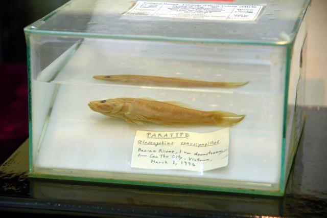 「ベトナム国内でのさらなる学術研究への寄与」を願われ、天皇陛下がベトナムに寄贈したハゼの標本=ハノイの自然科学大学生物学博物館、鈴木暁子撮影