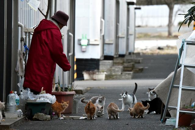 朝と夕方の1日2回、仮設住宅の住民や、かつて住んでいた人が、ネコたちにエサを与える=2月11日、宮城県山元町、福留庸友撮影