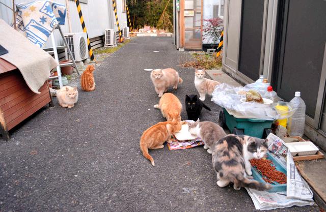 20匹目の「猫」を拾いますた [無断転載禁止]©bbspink.comYouTube動画>3本 ニコニコ動画>1本 ->画像>951枚