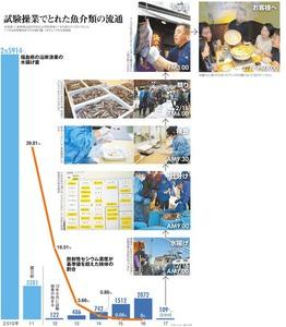 試験操業でとれた魚介類の流通<グラフィック・野口哲平>