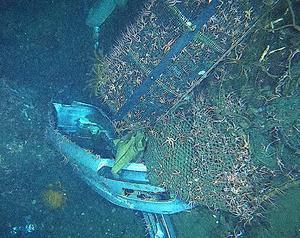車のバンパーや漁網にクモヒトデやウミシダが群がる=岩手県釜石市沖、海洋研究開発機構提供