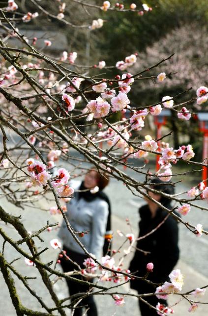 あたりには馥郁(ふくいく)とした香りが漂う=薩摩川内市東郷町