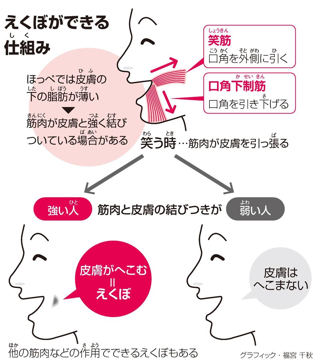 えくぼができる仕組(しく)み<グラフィック・福宮千秋>